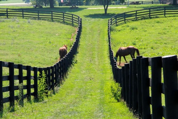 Creator and Danthebluegrassman, just a couple of the many residents at Old Friends. (Photo by Joseph Hall)