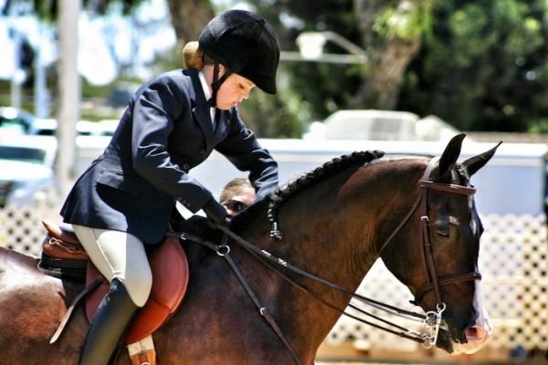 arabian-horse