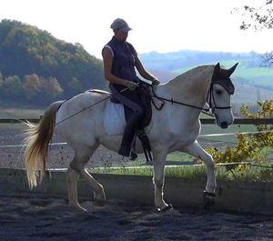 © Happy Horse Training