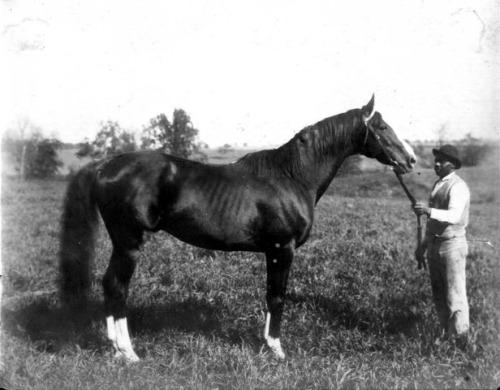 Champion Salvator as a stallion.