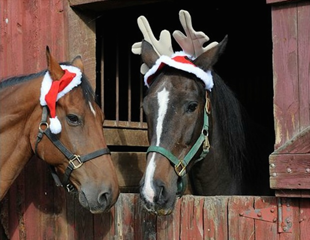 Horses Ready For Christmas The Original Mane N Tail
