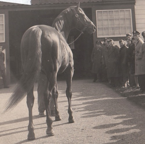 Man o' War parading for a groups of his fans at Faraway Farm sometime during the 1920's. This particular group consisted mostly of military personnel, veterans of World War I.