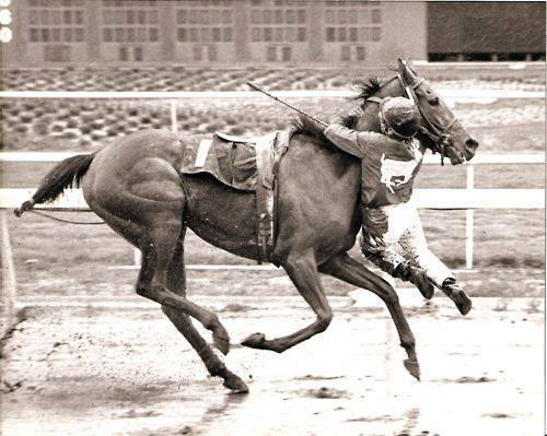 sweetwater-oak-jockey