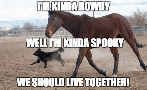 dog-and-horse